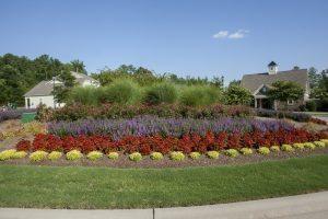 Pipeline Landscape Flowers