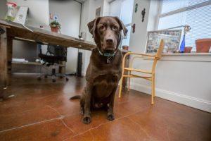 Colt Dog Visit